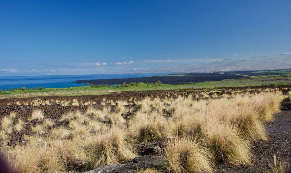 Grass that looks like troll heads on Hawaii.