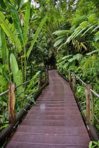The path at Hawaii Tropical Botanical Garden