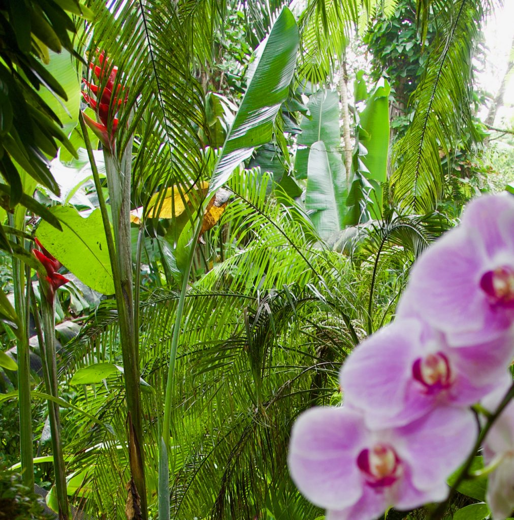 Beauty at the Hawaii Tropical Botanical Gardens.