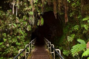 Entrance to the Thurston Lava Tube.