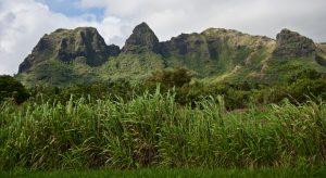 Kauai scenery.